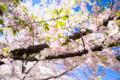 京都新聞写真コンテスト 京都府立植物園『青空を背景に その4』