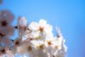 京都新聞写真コンテスト 京都府立植物園『青空を背景に その5』