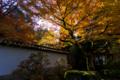 京都新聞写真コンテスト 南禅寺『降り注ぐ陽光』