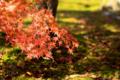 京都新聞写真コンテスト 南禅寺『苔に掛かる』
