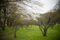 京都新聞写真コンテスト 大覚寺『枯れ木の野』