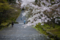 京都新聞写真コンテスト 二尊院『曇天』