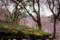 京都新聞写真コンテスト 原谷苑『苔むす』