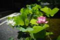 京都新聞写真コンテスト 妙心寺退蔵院『朝の鴇色』