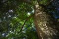 京都新聞写真コンテスト 大原野神社『木漏れ日』