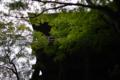 京都新聞写真コンテスト 清水寺『舞台を仰ぎ見る』