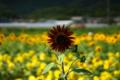 京都新聞写真コンテスト 大原野『黒い太陽』