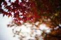 京都新聞写真コンテスト MIHOミュージアム『初紅葉5』
