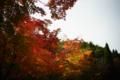 京都新聞写真コンテスト MIHOミュージアム『初紅葉6』