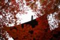 京都新聞写真コンテスト 善峯寺『多宝塔』