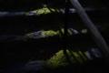 京都新聞写真コンテスト 白龍園『苔の階段』