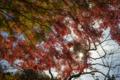 京都新聞写真コンテスト 白龍園『秋の日差し』