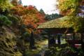 京都新聞写真コンテスト 白龍園『四阿と紅葉2』