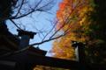 京都新聞写真コンテスト 鞍馬寺『寝殿にかかる紅葉』