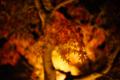 京都新聞写真コンテスト 永観堂『ライトアップ1』