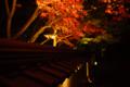京都新聞写真コンテスト 永観堂『ライトアップ3』