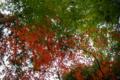京都新聞写真コンテスト 鹿王院『紅と緑のコントラスト』