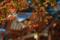 京都新聞写真コンテスト 長岡天満宮『社殿を背景に』