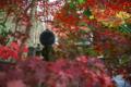 京都新聞写真コンテスト 光明寺『光背』