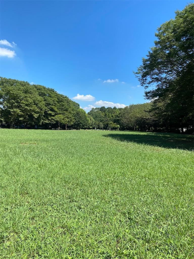 丈の短い草で覆われた広場