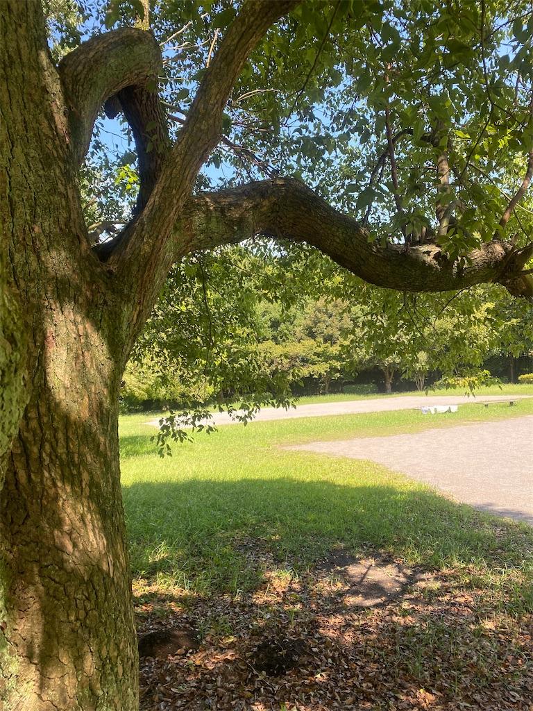 芝生の中に太い幹の木