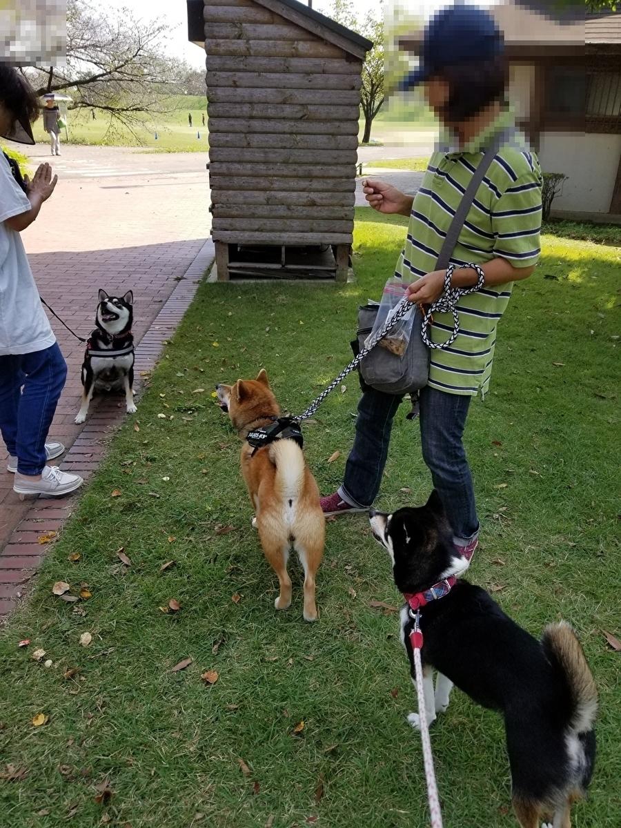 左から黒柴犬、赤柴犬、黒柴犬が並んでいます。