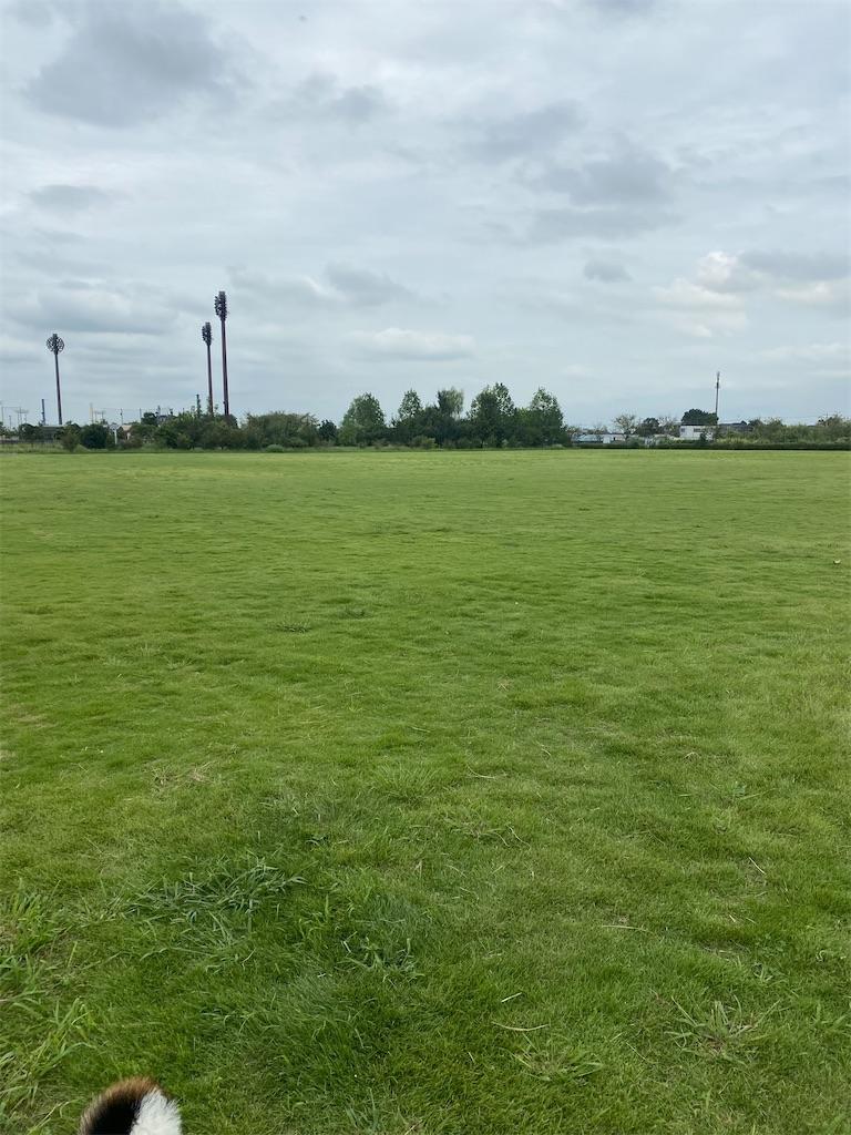 広い芝生の広場