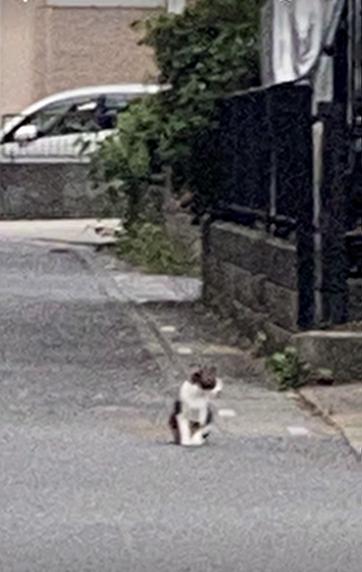 道路の端に座っているネコちゃん