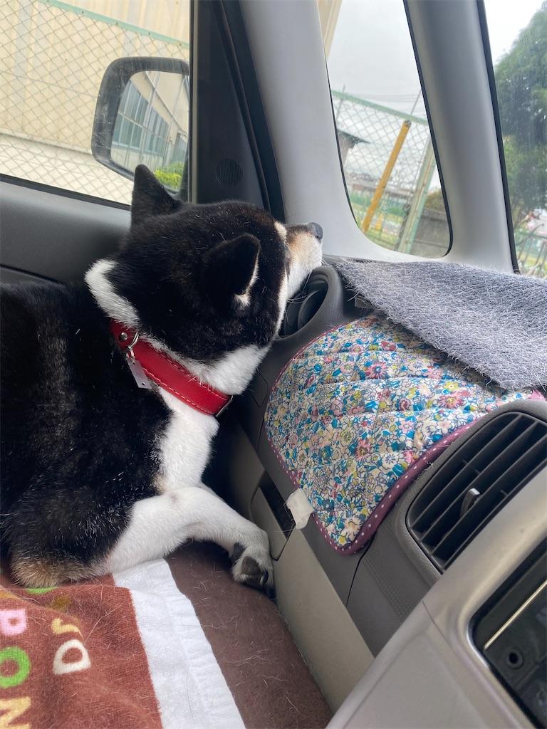 助手席で全面のエアコンのレジスターに首を当てている黒柴犬
