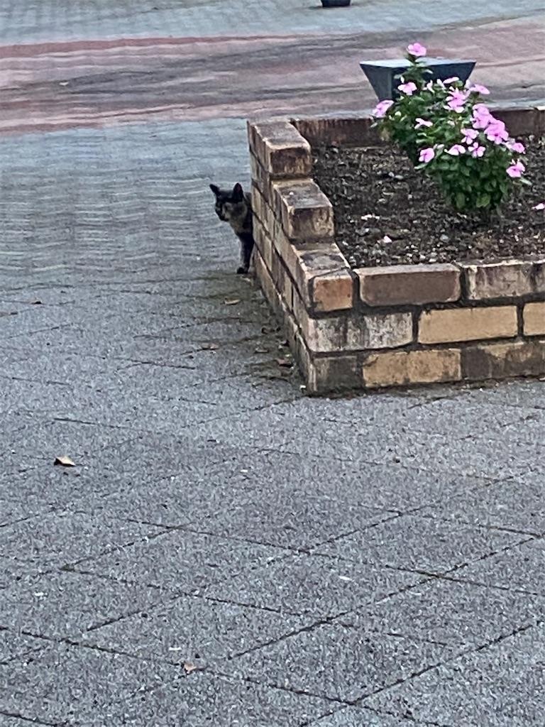 花壇の陰からジッと様子を見ているネコ