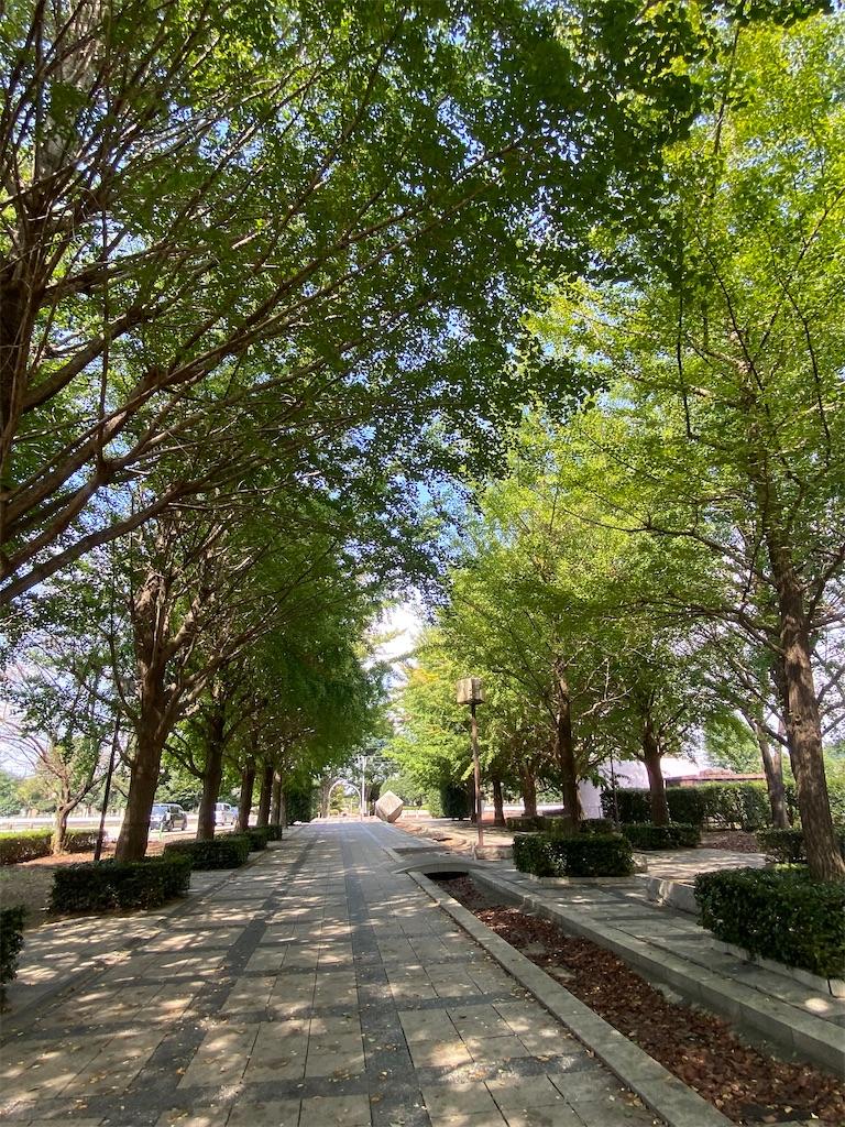まだ緑の葉っぱの銀杏並木