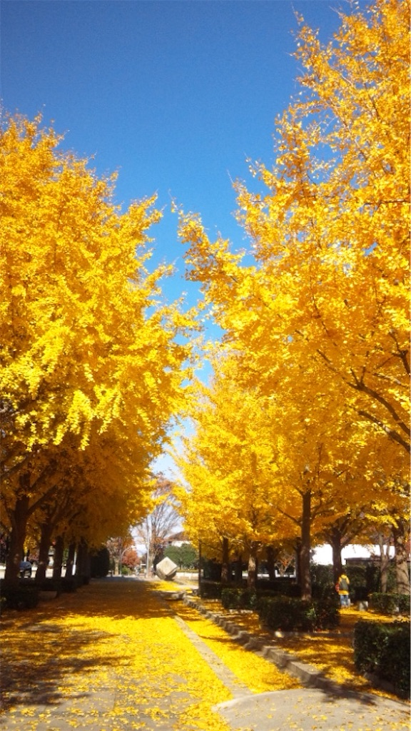 ゴールド色の銀杏並木