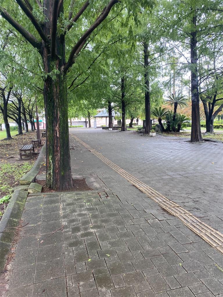 公園に生えている樹木