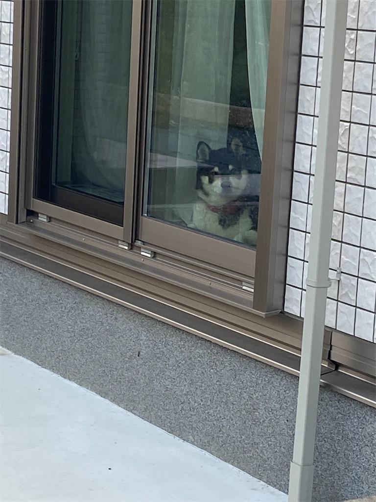 窓ガラスにくっついて外にいる私を見ている