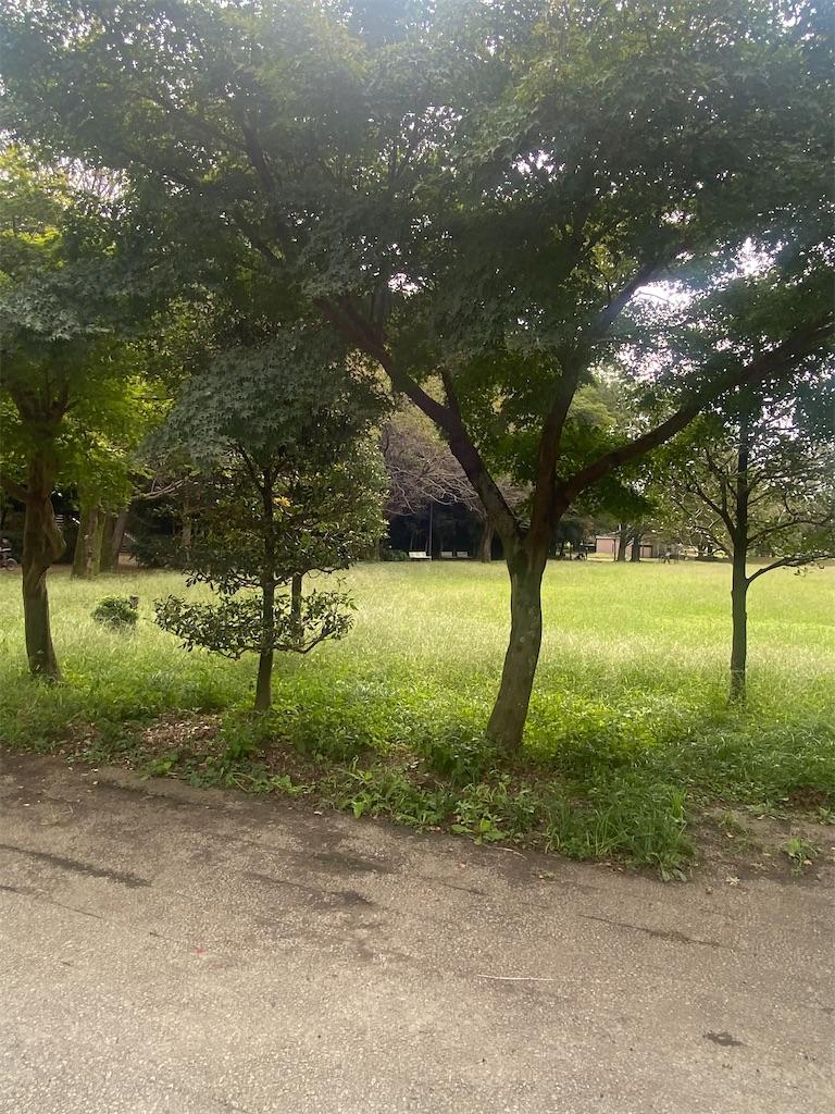 樹木の先には芝生が生えている