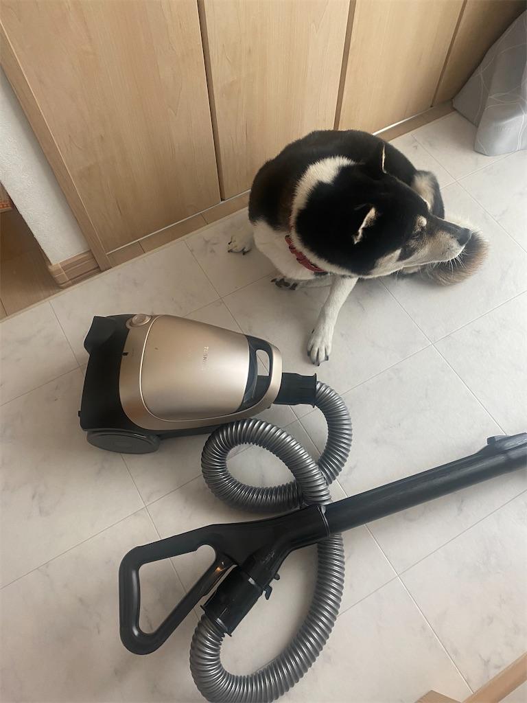 掃除機のそばに寝転がっている黒柴犬