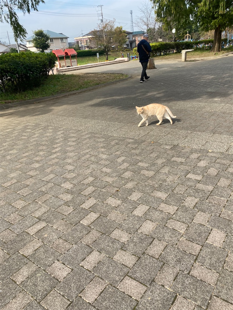 目の前を歩いている黒柴犬