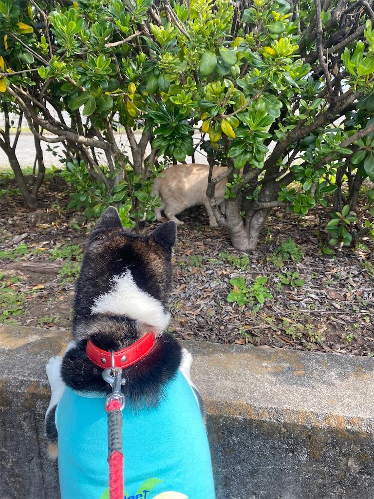 草むらにいるネコを見ている黒柴犬