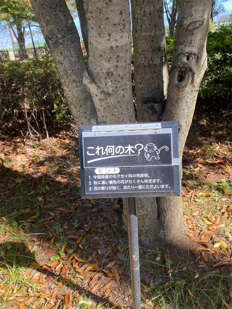 これ何の木と書いてある立て札