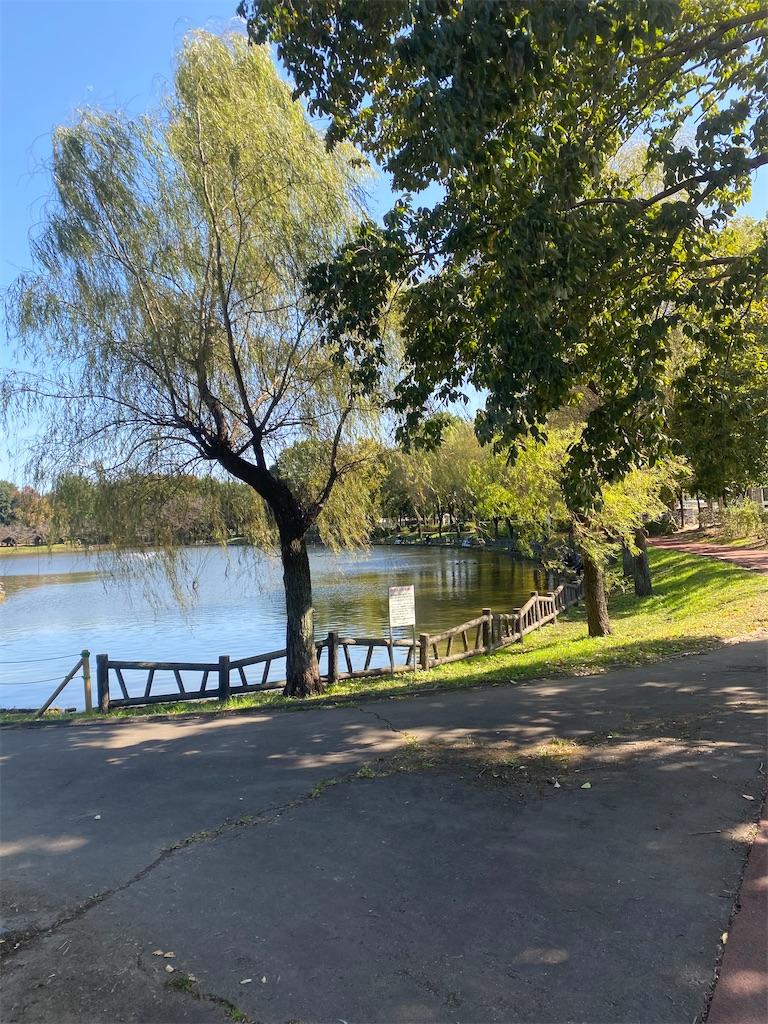 池と樹木の画像