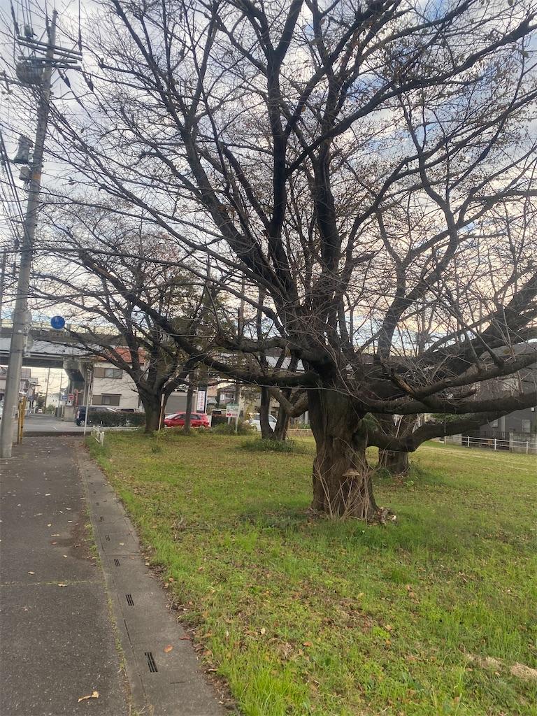 秋枯れした大きな樹木