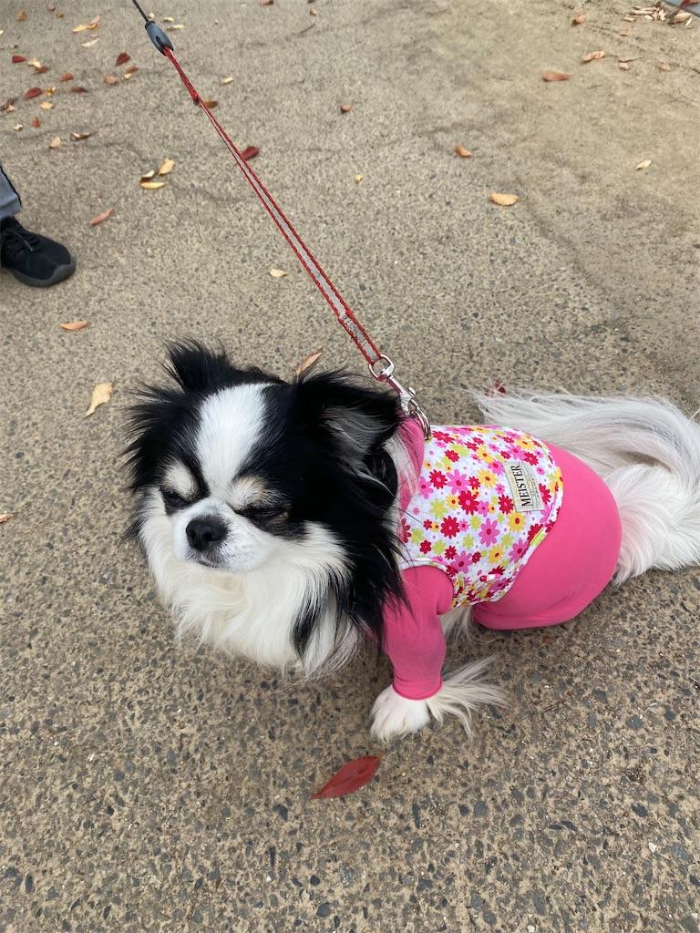 ピンク色の服を着ているチワワ