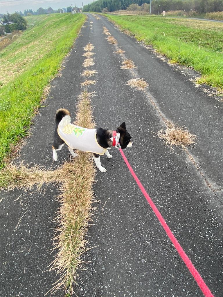 土手を歩いている黒柴犬