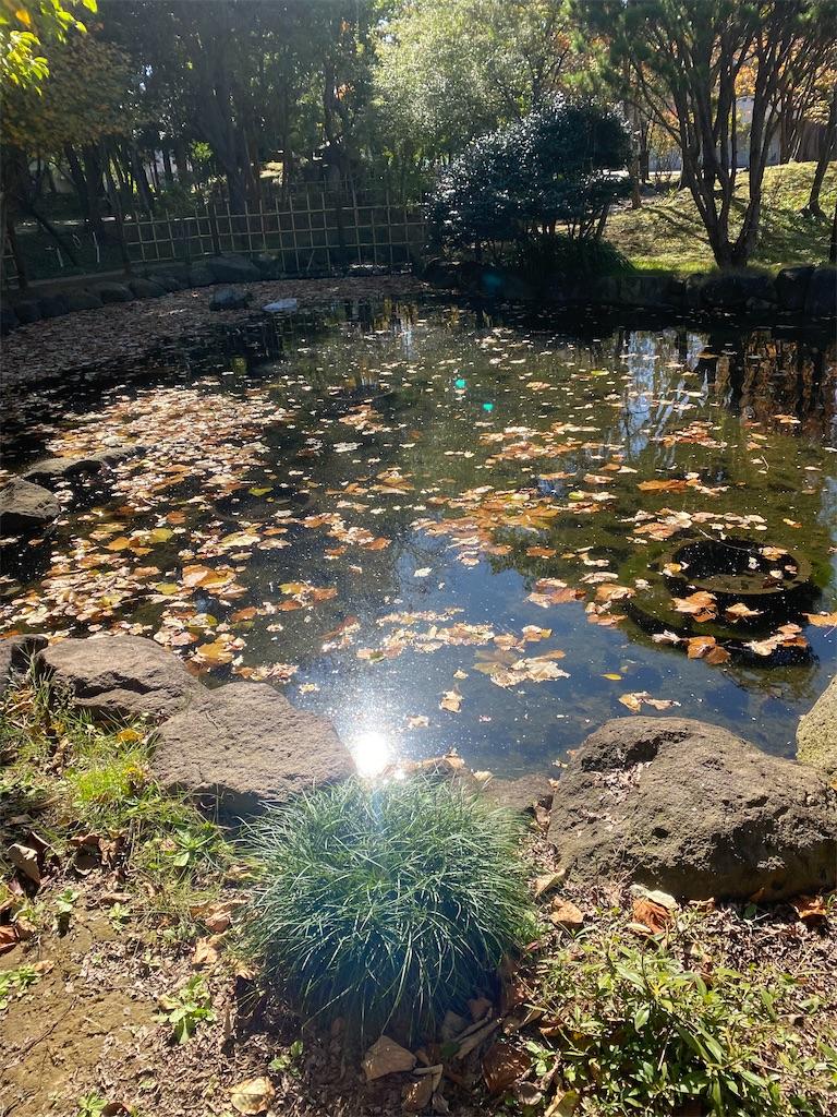 太陽光線が写って光っている池