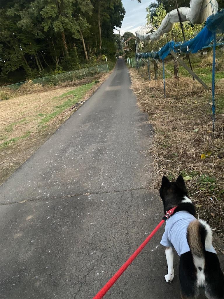 林道の端を歩いている黒柴犬