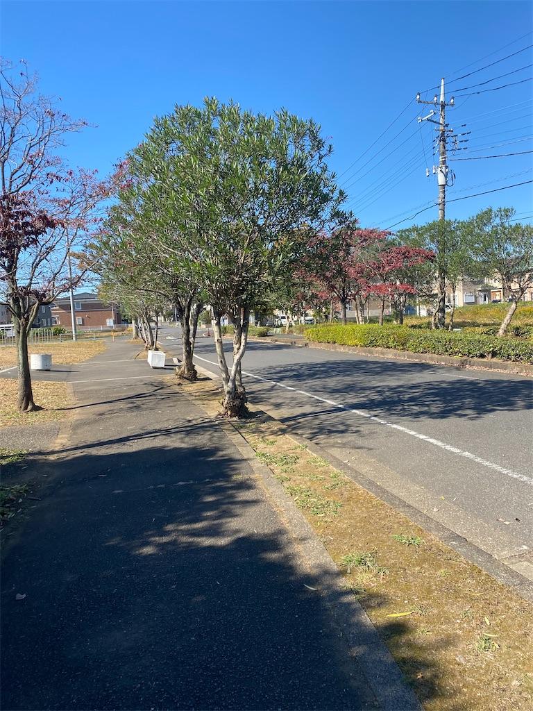 街路樹が生えている道路