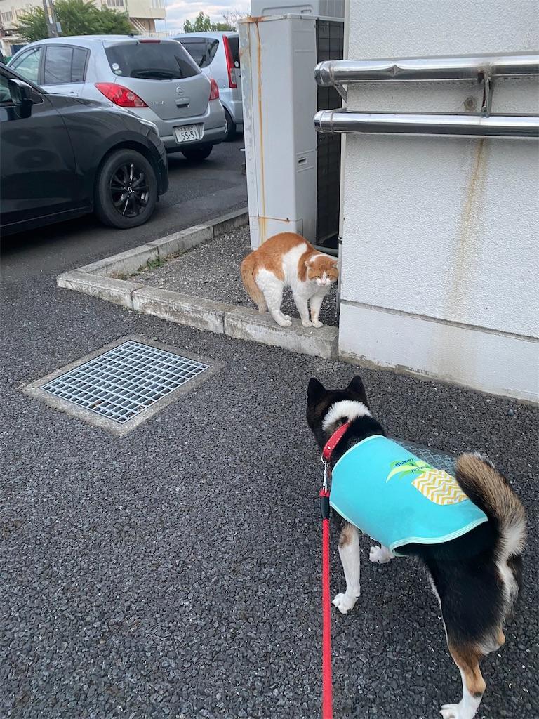 ネコと黒柴犬が睨み合っている