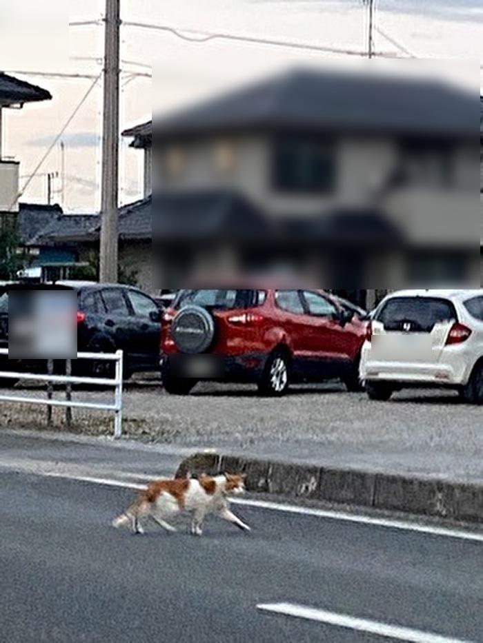 道路を横断しているネコ