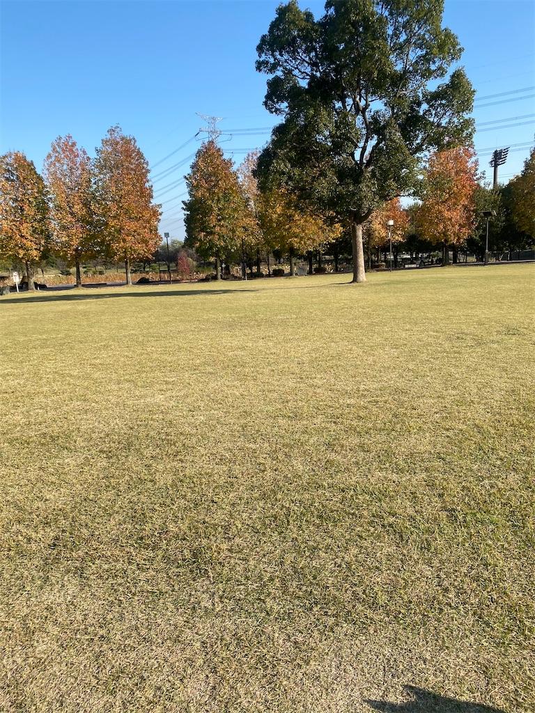 広い芝生広場に一本の木が立っている
