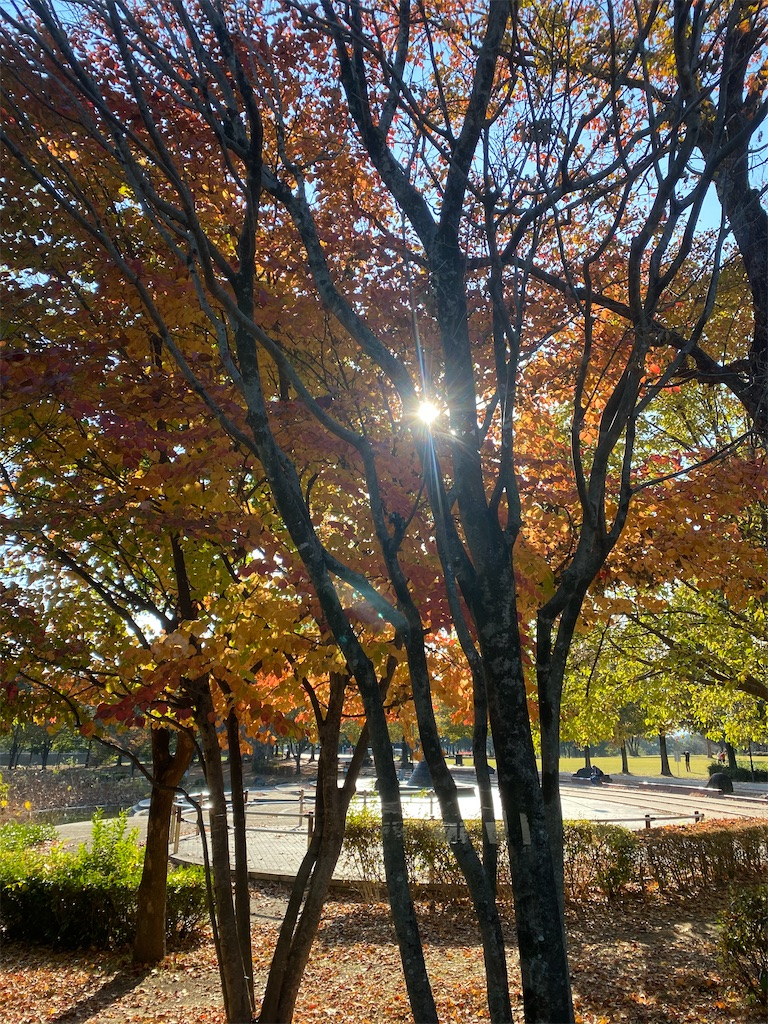 木漏れ日が光っている